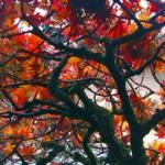 Cuento: el árbol mágico
